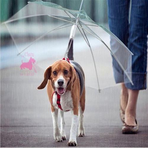 parapluie laisse pour chien. Black Bedroom Furniture Sets. Home Design Ideas
