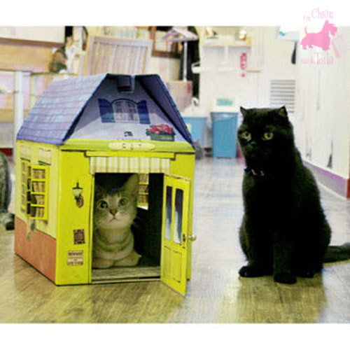 maison en carton pour chat vurano catspia pour chat. Black Bedroom Furniture Sets. Home Design Ideas
