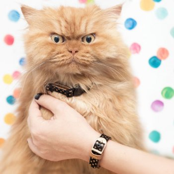 "Collier CHAT + Bracelet ""DOTTY MOGGY"" - FRIENDSHIPCOLLAR"