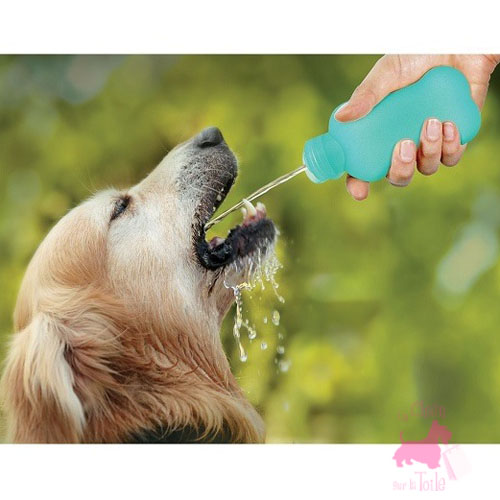 "Bouteille ""Water4Dog"" - UNITED PETS"