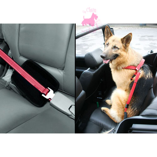 "Laisse ""Walk & Drive"" - PATENTO PET"