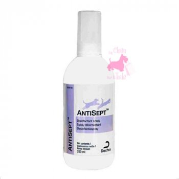 ANTISEPT SPRAY - AGECOM